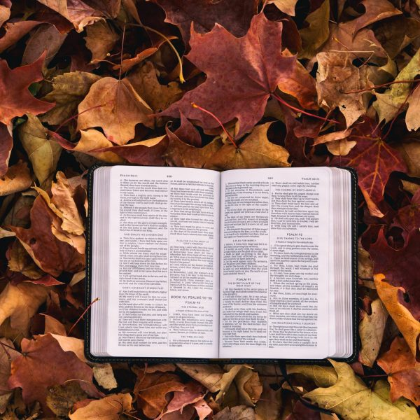 Bible in autumn leaves
